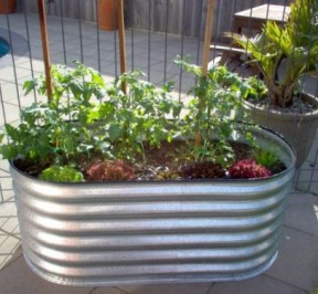 Raised Garden Bed 10 Tips To Get The Best From Yours 1