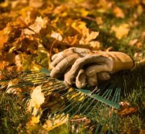 Autumn-Gardening-tips-1