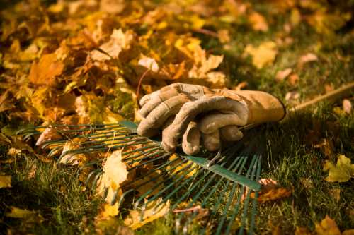 autumn gardening tips leaves and gloves