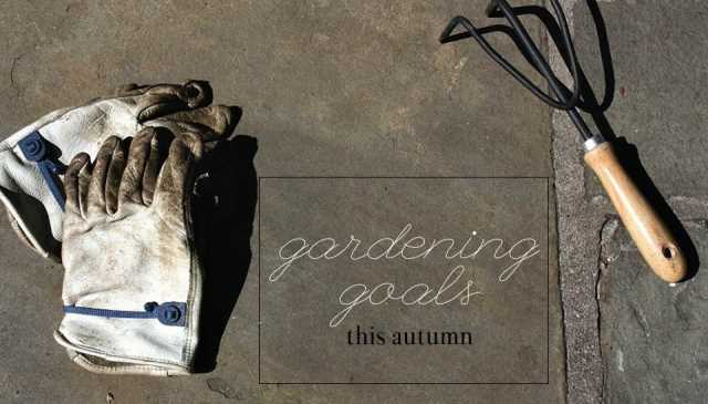 gardening tips and goals for autumn