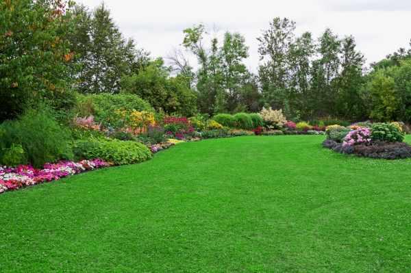 healthy garden lawn