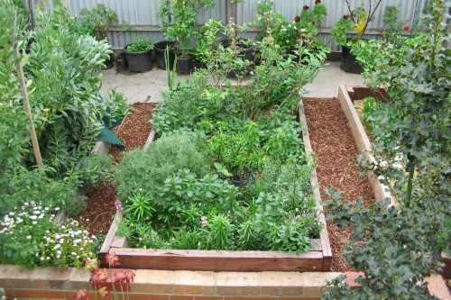 raised garden bed area
