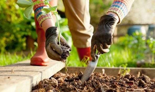 summer garden planting